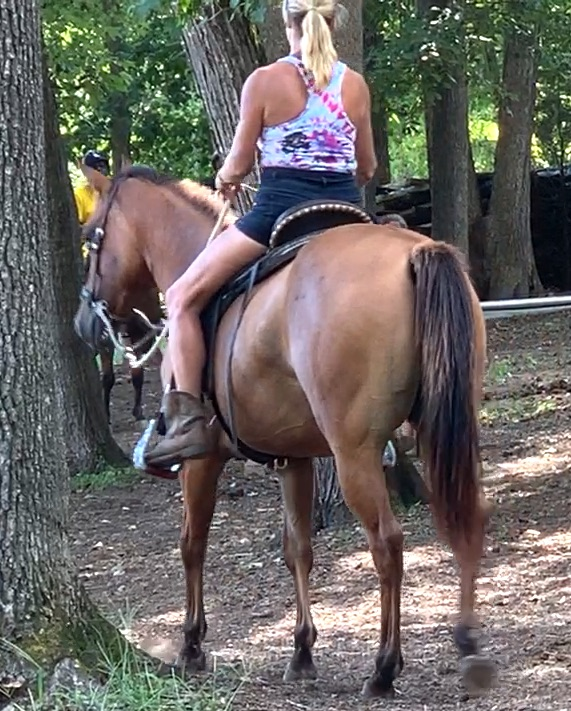 Dun Quarter Horse Mare for Sale in Raleigh, NC