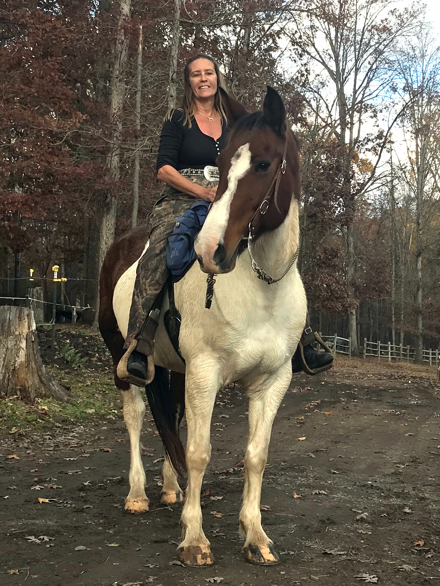 Nice Spotted Draft Horse for Sale in Raleigh, NC