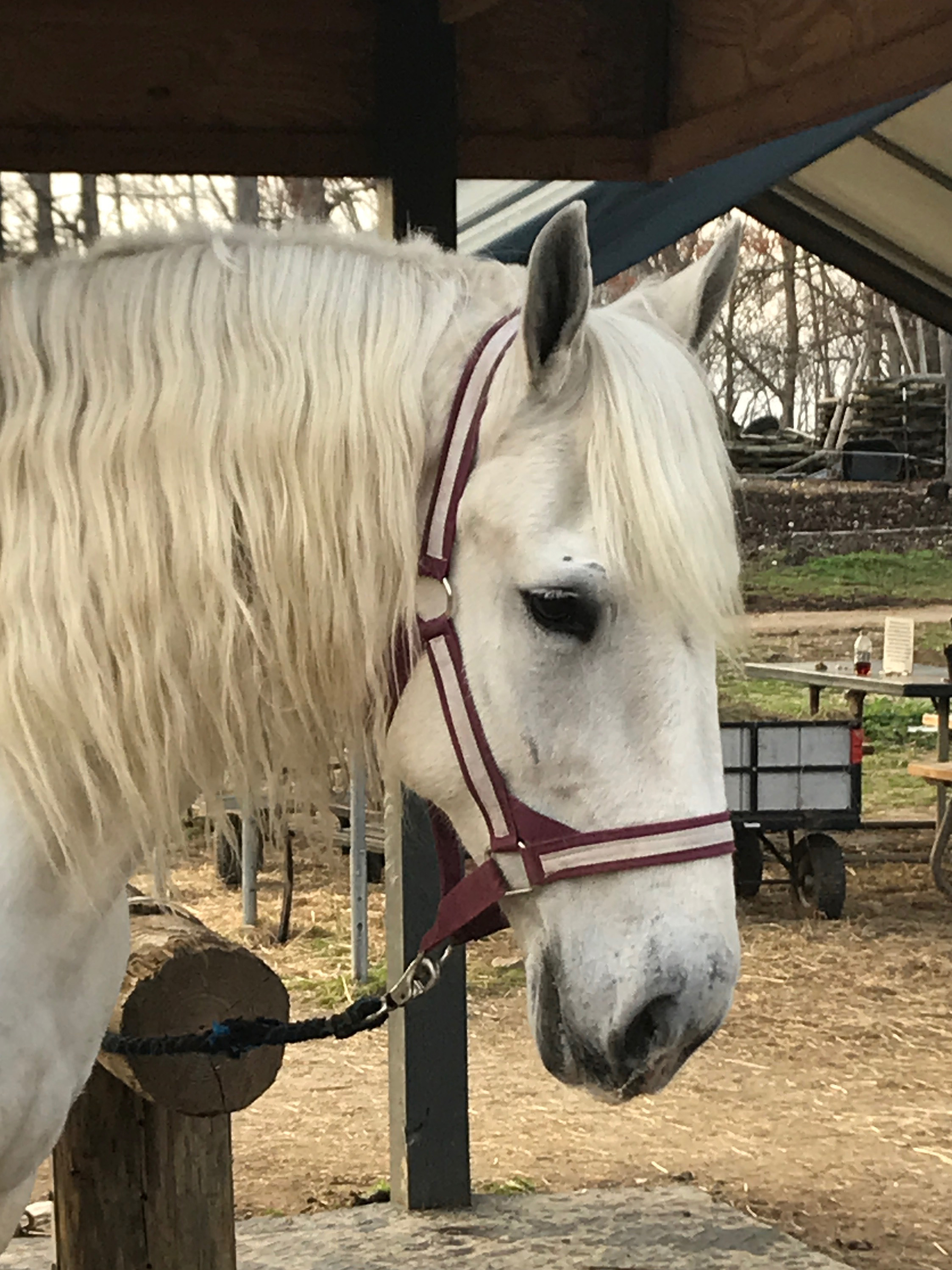Horseback Riding Reservations in Raleigh, NC at Dead Broke Farm