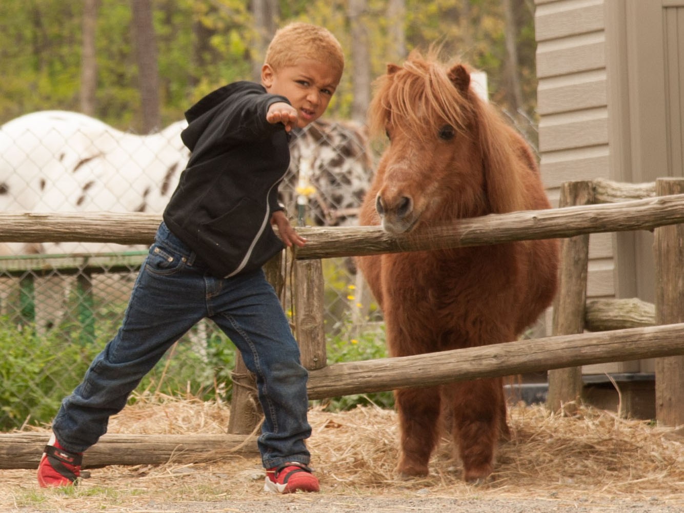 Camp Kid Enjoying DBF's Miniature Horse, Summer